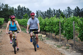 mtb_vineyards